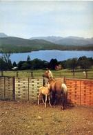 Cavallo Con Puledro - 502 - Formato Grande Non Viaggiata – E 13 - Cavalli