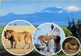 Wildlife Of Krnya - In The Background Is Mount Kilimanjato - Formato Grande Viaggiata – E 13 - Leoni