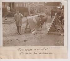 1912 CONCOURS AGRICOLE ARRIVÉE DES ANIMAUX  18*13CM Maurice-Louis BRANGER PARÍS (1874-1950) - Fotos