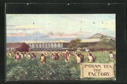 AK Indian Tea Factory Coysh Ltd. - Cartes Postales