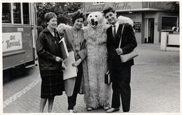 Photo Originale Déguisement & Eisbär, Ours Blanc Polaire Devant Le Restaurant Cibelle & Tramway 1959 - Identifiées Dos - Identified Persons