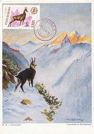 D37889 CARTE MAXIMUM CARD 1966 ROMANIA - RUPICAPRA CHAMOIS ISARD GEMS CP ORIGINAL - Gibier