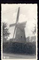 Brecht - Molen - Moulin - 1940 - Brecht