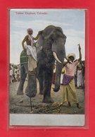 SRI LANKA-CPA COLOMBO - TUSKER ELEPHANT - Sri Lanka (Ceylon)