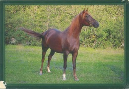 Animals, Horses, Pferde, Konie, Cheval, Pan Dragon - Cavalli