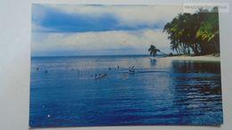 D166802 Trinidad & Tobago  - Pigeon Point -Pelicans -Tobago  Ca 1960's - Trinidad