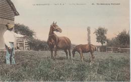 LA VIE NORMANDE    UN DEMI SANG NORMAND - Paardensport