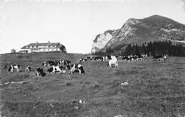 Chalet Du Gros Plané Et Le Moléson - FR Fribourg