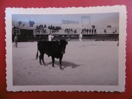 ARLES ARENES COURSE CAMARGUAISE TAUREAU RASETEUR PHOTO 9 X 6.5 - Luoghi