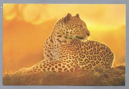 NL.- LUIPAARD. WWF. Foto: Frans Lanting / FLPA. - Andere