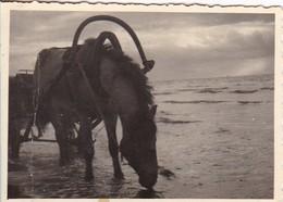 Foto Panjepferd Am Peipussee - Pferd Geschirr Russland Estland - 1942 - 9,5*6,5cm (43004) - Orte