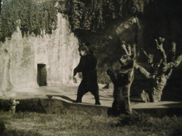 FOTO ORSO BEAR OURS TIMBRO GENOVA SESTRI - Foto