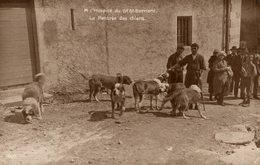 A L HOSPICE DE GRAND ST BERNARD LA RENTRÉE DES CHIENS - VS Valais