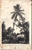 ILES FIJI - Climbing Coacoanut Tree - Fidschi