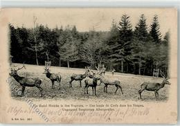 52456195 - Hirsch Vogesen - Tierwelt & Fauna