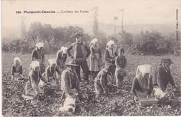 PLOUGASTEL-DAOULAS - Cueillette Des Fraises - TBE - Plougastel-Daoulas