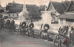 ¤¤   -  CAMBODGE    -  PHNOM-PENH   -  Eléphants Du Roi , Harnachés Pour La Promenade     -  ¤¤ - Cambodja