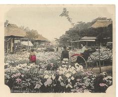 JAPON TOKIO Iris Garden In Horikiri - Tokio