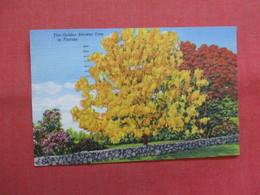 Golden Shower Tree  Florida    -ref    3569 - Trees