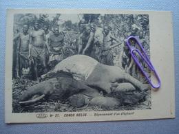 CONGO BELGE : Dépecement D'un éléphant - Congo - Kinshasa (ex Zaire)