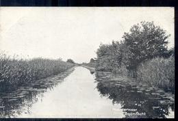 Naardermeer - Boomtocht - 1920 - Pays-Bas