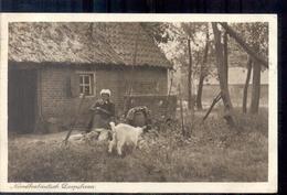 Noord Brabant - Dorpsleven - Geit - 1916 - Sin Clasificación