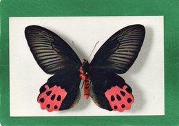 PAPILLON HORISHANUS (Formose) Collection Boubée CPA  Impeccable - Butterflies