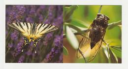 CIGALE PAPILLON PROVENCE Carte Postale N° 38 SUD DE LA FRANCE - Papillons