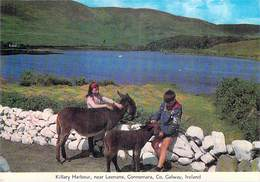 Irlande > Ireland - GALWAY Killary Harbour Near Leenane Connemara  (enfants ânes âne)*PRIX FIXE - Galway