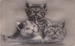 CHAT ILLUSTRATEUR ,carte à POUET POUET ,et Qui Fonctionne Encore  (( Lot 348)) - Cats