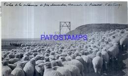 118505 ARGENTINA TIERRA DEL FUEGO ESTANCIA JOSE MENENDEZ ARREO PARA FRIGRIFICO SHEEP 16.5 X 10 CM PHOTO NO POSTCARD - Fotografie