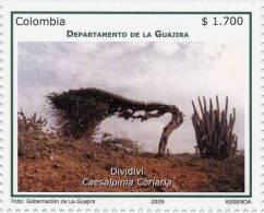 Lote 19e6, Colombia, 2009, Guajira, Dividivi, Flora Stamp - Colombia