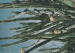 Dear Doctor Biomarine Ou Assimilée - Type Amora - La Réunion Cactus - Advertising