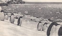 Dear Doctor Biomarine Ou Assimilée - Type Amora - Dans Le Sillage De Bougainville - Falkland - Werbepostkarten