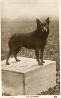UNITED KINGDOM - Dogs  - RPPC - The Schipperke  - London PM 1929 - Cani