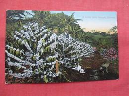 Coffee Farm Baqueti Panama   -ref    3570 - Flowers, Plants & Trees