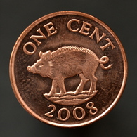 Bermuda 1 Cent Magnetic 2008. Wild Boar, Pig, Animal Wildlife Coin. UNC. Km107a - Bermuda