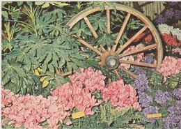 Euroflora 1976-genova - Esposizioni