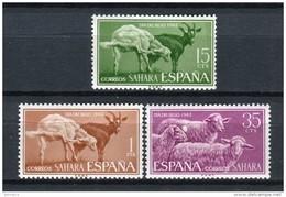 Sahara 1962. Edifil 212-14 ** MNH. - Sahara Spagnolo