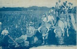 Wein Weinlese Bordeaux I-II Vigne - Ausstellungen