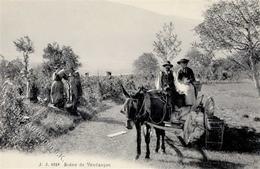 Wein Weinlese I-II Vigne - Ausstellungen