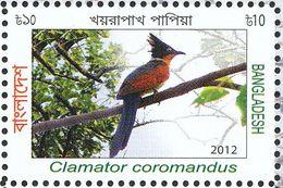 Bangladesh.2013.. Coucou à Collier - Cuckoos & Turacos