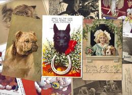 Lot 2025 De 10 CPA Chien Dog Déstockage Pour Revendeurs Ou Collectionneurs - 5 - 99 Karten