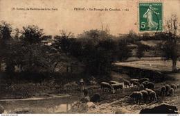 181-2019   PIBRAC  LE PASSAGE DU COURBET - Pibrac