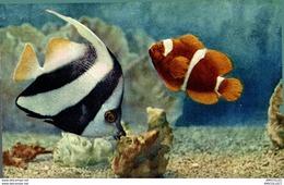 3739-2018   AQUARIUM DE MONACO HENIOCHUS MACROLEPIDOTUS - Oceanographic Museum