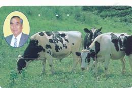 JAPAN Telefonkarte - 350-7654- Kuh, Rind  - Siehe Scan - Kühe