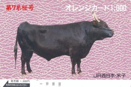 JAPAN Prepaidkarte -  Kuh, Rind  - Siehe Scan - Kühe