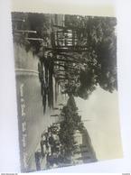 ITALY - MARINA DI RONCHI ( MASSA-CARRARA ) VIALE FRIGIDO, CINQUALE - VIAGGIATA 1956 - Massa