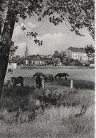 AK 0305  Wolmirstedt / Ostalgie , DDR Um 1961 - Wolmirstedt