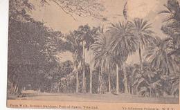 Palm Walk, Botanic Gardens,  Port Of Spain,  Trinidad  1914 - Trinidad